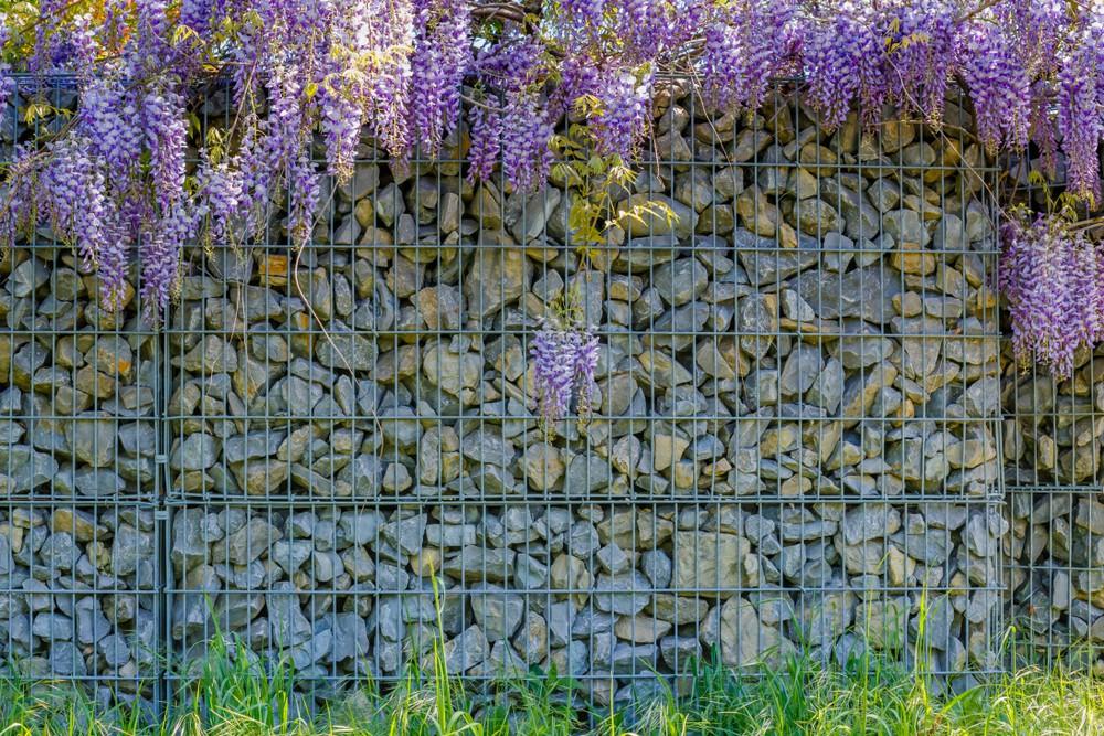 Stylowe ogrodzenie gabionowe pokryte kwiatami wisterii - Betto.pl